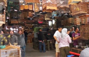 Pasar Burung Pramuka. Dok: www.omkicau.com